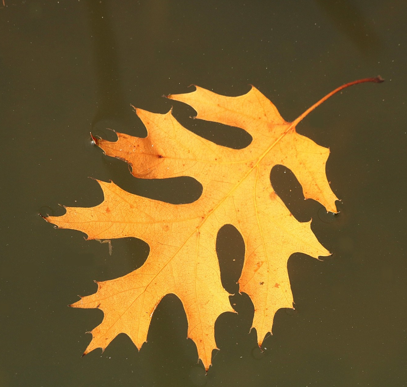 autumn-leaf-floating-in-water.jpg